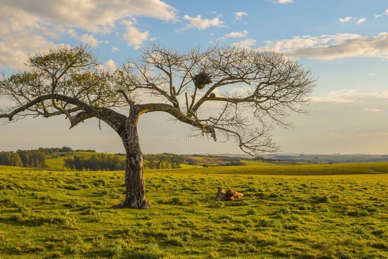 Det magiska skymningträdet och solnedgången arkivbilder