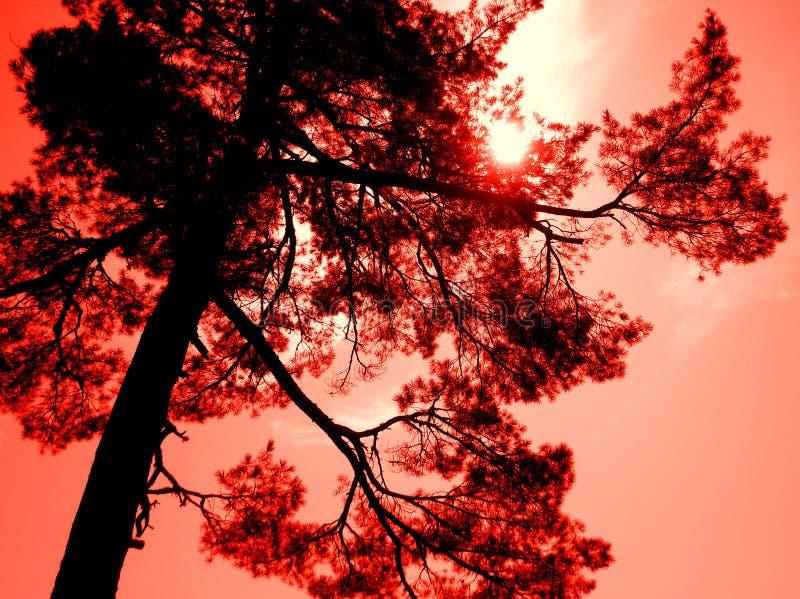 Det majestätiska net en röd himmel fotografering för bildbyråer