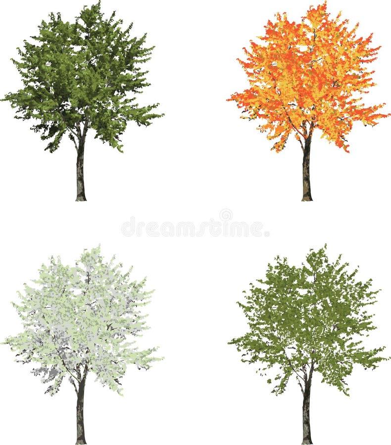 Det medelstora trädet i för sommarnedgång för fyra säsonger vår för vinter isolerade stock illustrationer