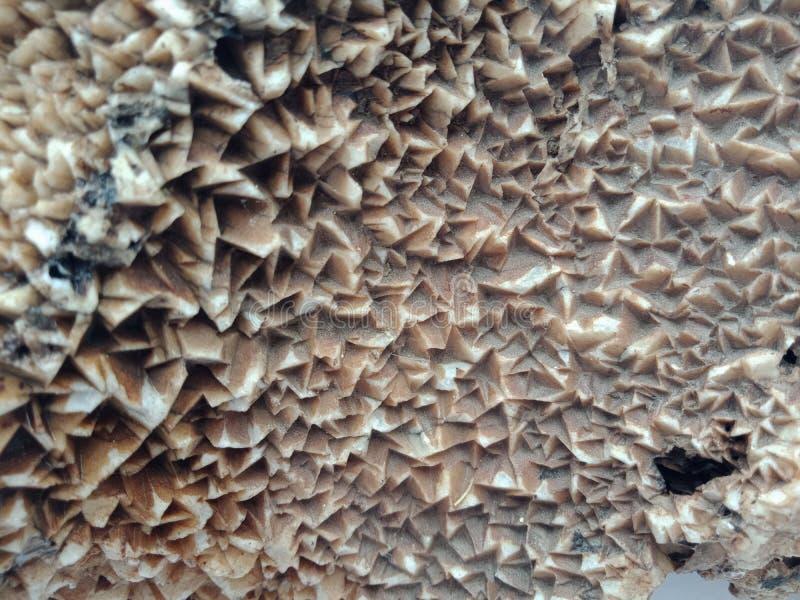 Det mineraliska crystal slutet upp sällsynt halvädelt för naturlig sten, bakgrundstapet royaltyfri foto