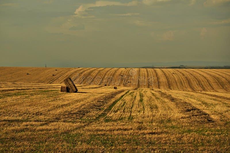 Det Moravian fältet på Hanà ¡, royaltyfri fotografi