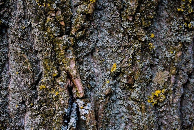 Det mossiga trädet zoomade in en skog royaltyfria foton