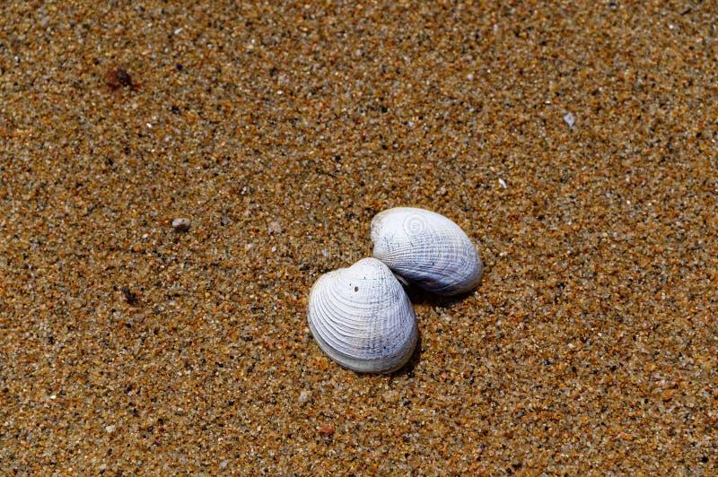 Det nästan särade skalet ligger säkerhetskopia på en sandig strand fotografering för bildbyråer