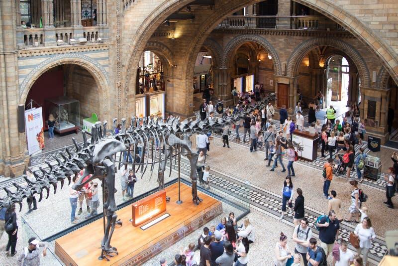 Det nationella historiemuseet, är ett av det mest favorit- museet för familjer i London royaltyfria bilder