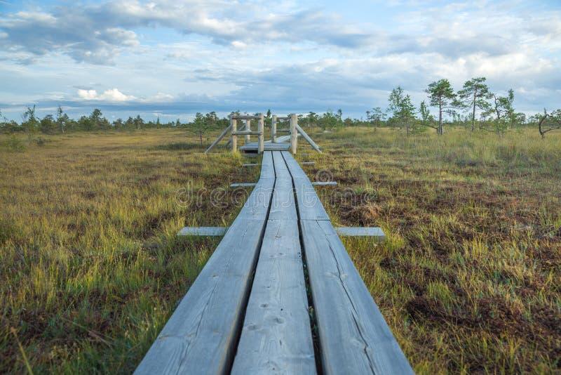 Det nationella träsket parkerar i Lettland royaltyfri foto