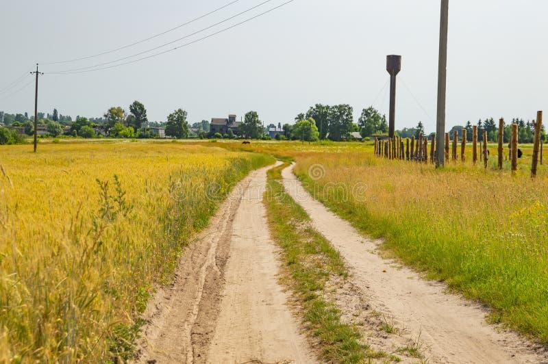 Det naturliga landskapet är en grusväg längs ett vetefält royaltyfri foto