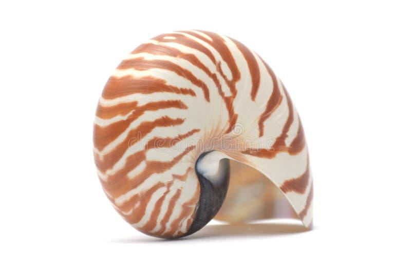 Det Nautillus skalet på vit bakgrund arkivfoton