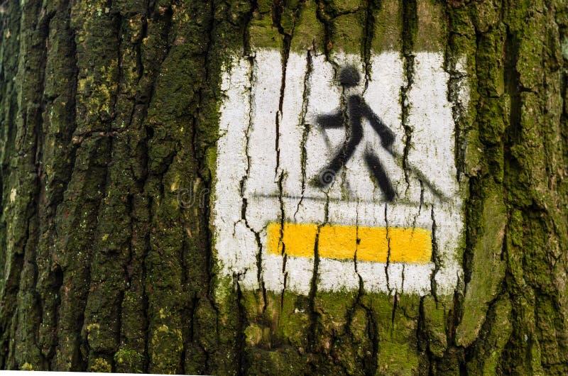 Det nordiska gå spårtecknet målade på trädet i skogsunnen royaltyfri fotografi