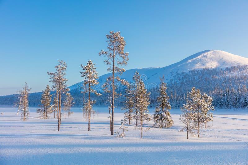 Det nordliga vinterlandskapet - sörja träd, skogen och berget arkivbild