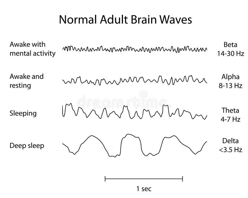Det normalahjärnan vinkar EEG stock illustrationer