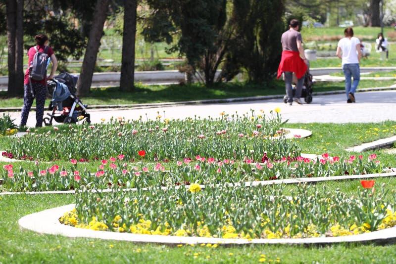 Det oigenkännliga folket går och kopplar av i parkera i vår Soligt väderbegrepp Folket går i en parkera runt om blommor royaltyfri foto