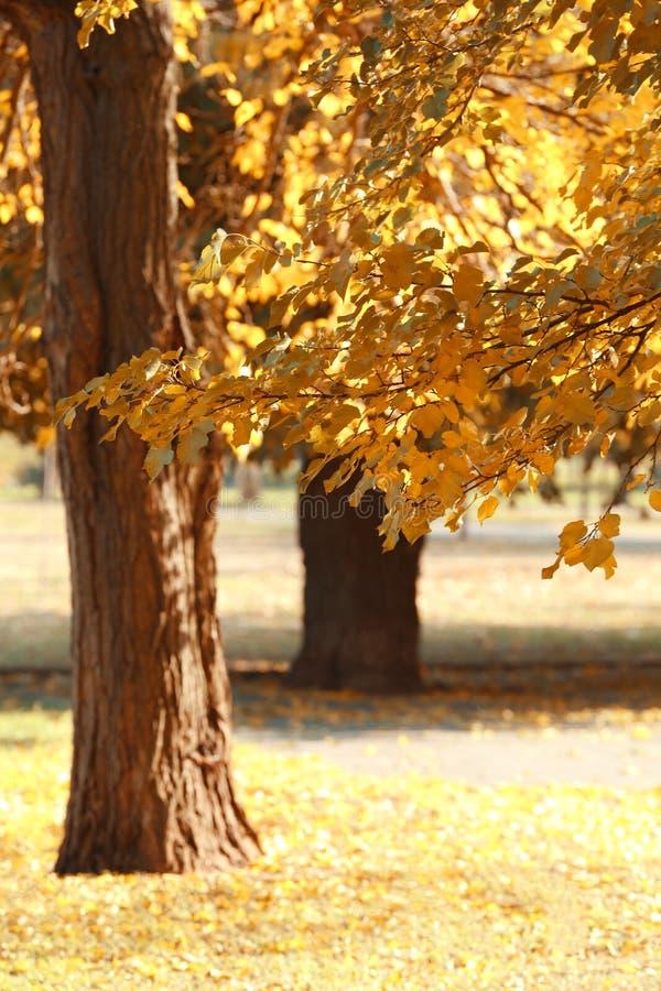 Det pittoreska landskapet av hösten parkerar royaltyfria foton