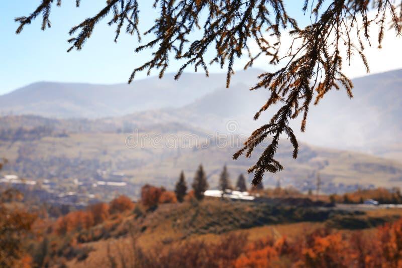Det pittoreska landskapet med sörjer trädlövruskor royaltyfria bilder