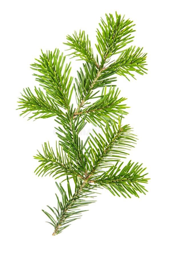 Det prydliga riset förgrena sig isolerad vit bakgrund för julträdet royaltyfria bilder