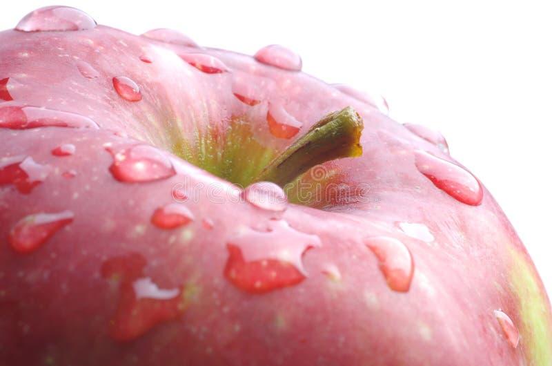 Det röda äpplet kröp ihop med vattendroppar arkivfoton