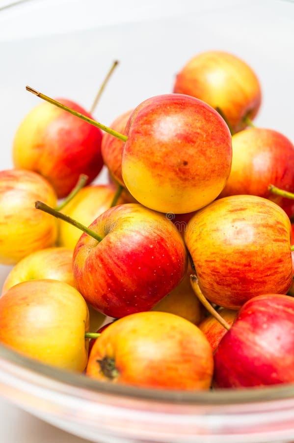 Download Det Röda äpplet Växer I Bunke Fotografering för Bildbyråer - Bild av fokus, hand: 78731019