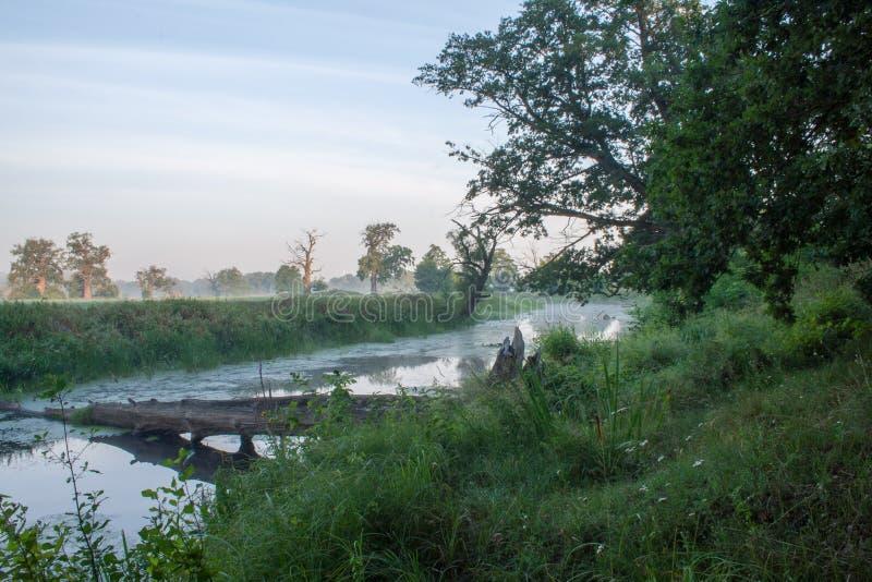 Det Rogalin landskapet parkerar - aoxbowsjön i misten för soluppgång royaltyfri bild