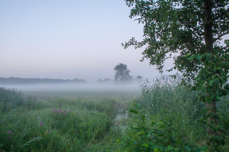 Det Rogalin landskapet parkerar - den breda ängen med oxbowsjön och den gamla eken i misten för soluppgång royaltyfria foton