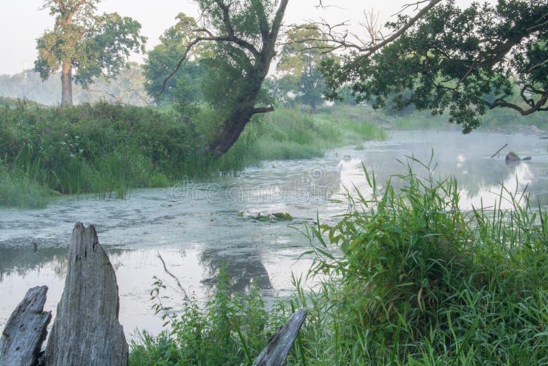 Det Rogalin landskapet parkerar - den omgeende trädaoxbowsjön med i misten efter soluppgång royaltyfri fotografi