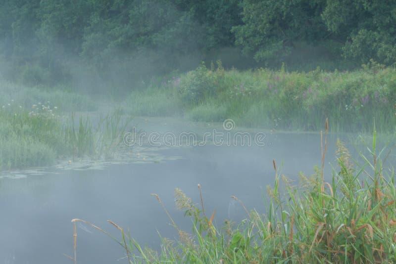 Det Rogalin landskapet parkerar - oaxbowsjön i misten för soluppgång royaltyfri fotografi