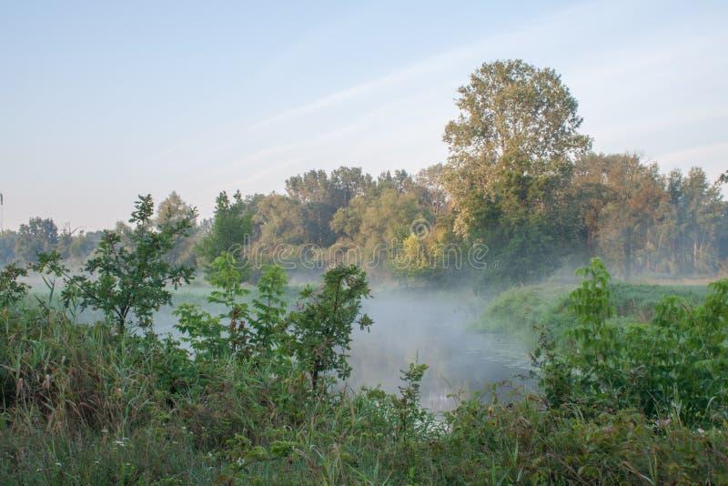Det Rogalin landskapet parkerar - oxbowsjön i misten efter soluppgång arkivfoton