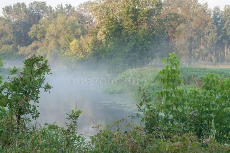 Det Rogalin landskapet parkerar - oxbowsjön i misten i soluppgång-gryning royaltyfri fotografi