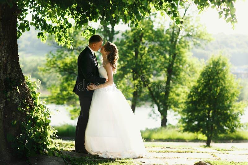 Det romantiska paret står under de gröna trädbladen fotografering för bildbyråer