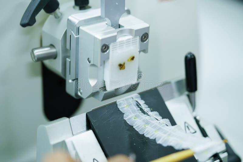 Det roterande Microtomeavsnittet för diagnos i patologi gör microsc royaltyfria foton