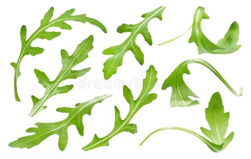 Det Ruccola bladet som isoleras på vit bakgrund, grön arugula för singel, lämnar samlingen royaltyfri fotografi
