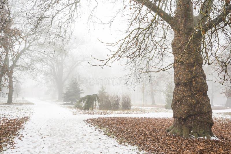Det sällsynta trädet i vintern parkerar in efter första snö fotografering för bildbyråer