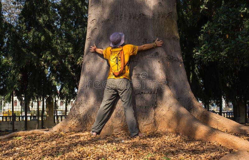 Det sakrala trädet arkivfoto