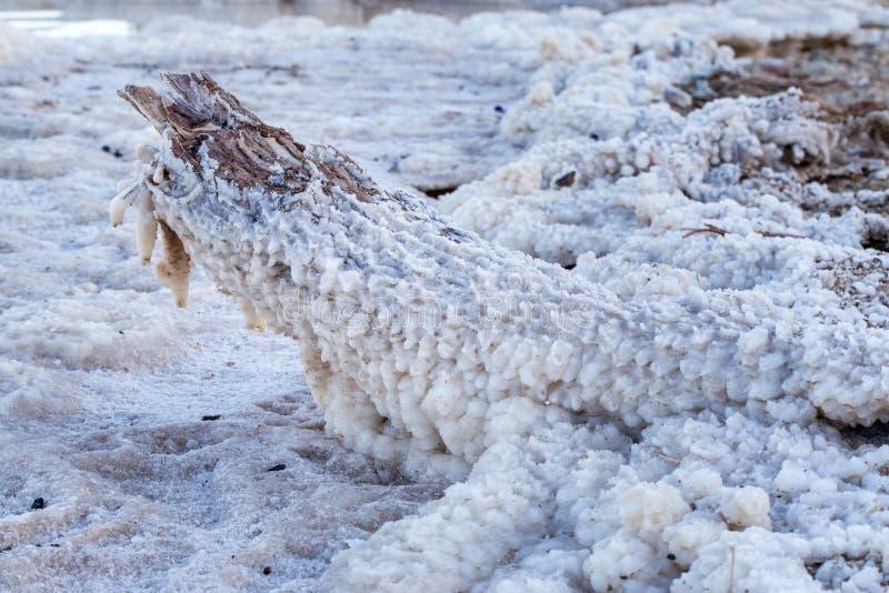Det salta döda havet klumpa sig den dolda stamstammen royaltyfria foton