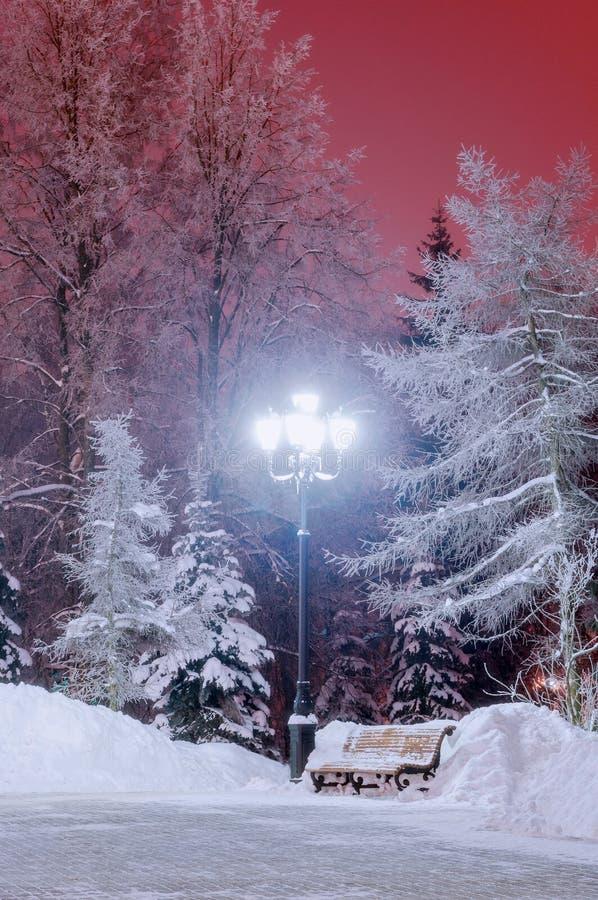 Det snöig vinternattlandskapet - parkera med bänken under träden fotografering för bildbyråer
