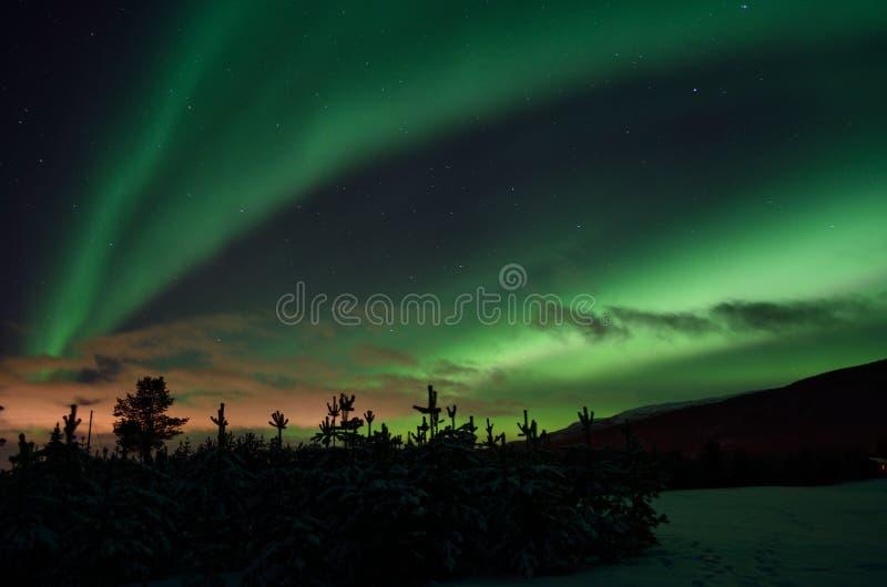 Det starka drömlika norrskenet på stjärnan fyllde nigh himmel över prydliga träd och snöig fält royaltyfria foton