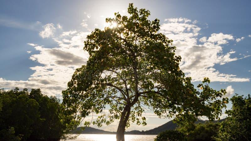 Det stora trädet nära floden med aurasolljusstrålen och vit fördunklar på solnedgången i sommar arkivfoto