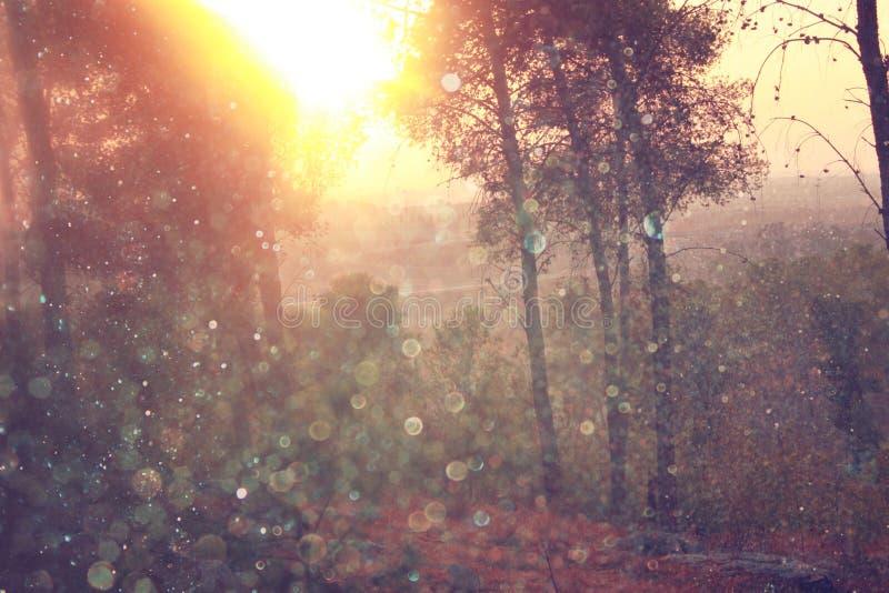 Det suddiga abstrakta fotoet av ljusbristningen bland träd och blänker bokehljus filtrerad bild och texturerat arkivfoton