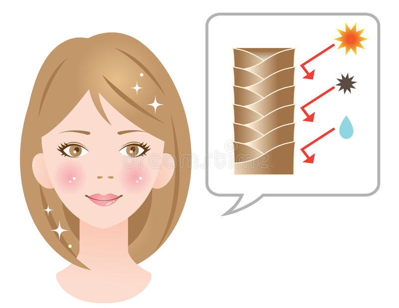 Det sunda nagelbandlagret skapar skinande hår royaltyfri illustrationer