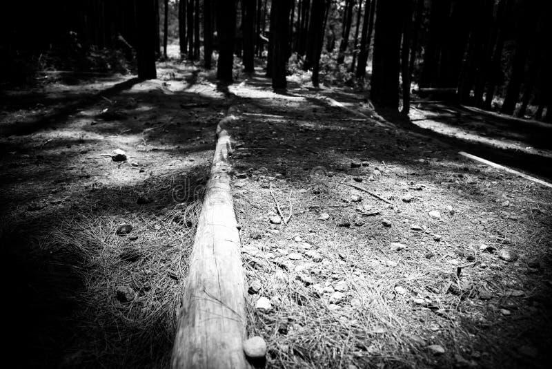 Det svartvita gå spåret längs den tropiska regnskogen sörjer träd royaltyfri fotografi