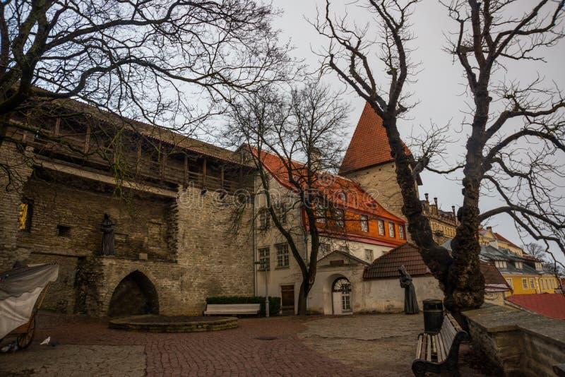 Det tidigare fängelsetornet Neitsitorn i gamla Tallinn, Estland Jungfru- torn fotografering för bildbyråer