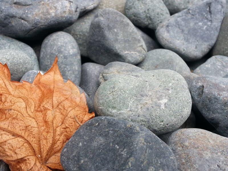 Det torkade bladet på litet, rundat, vaggar kiselstenar arkivbild