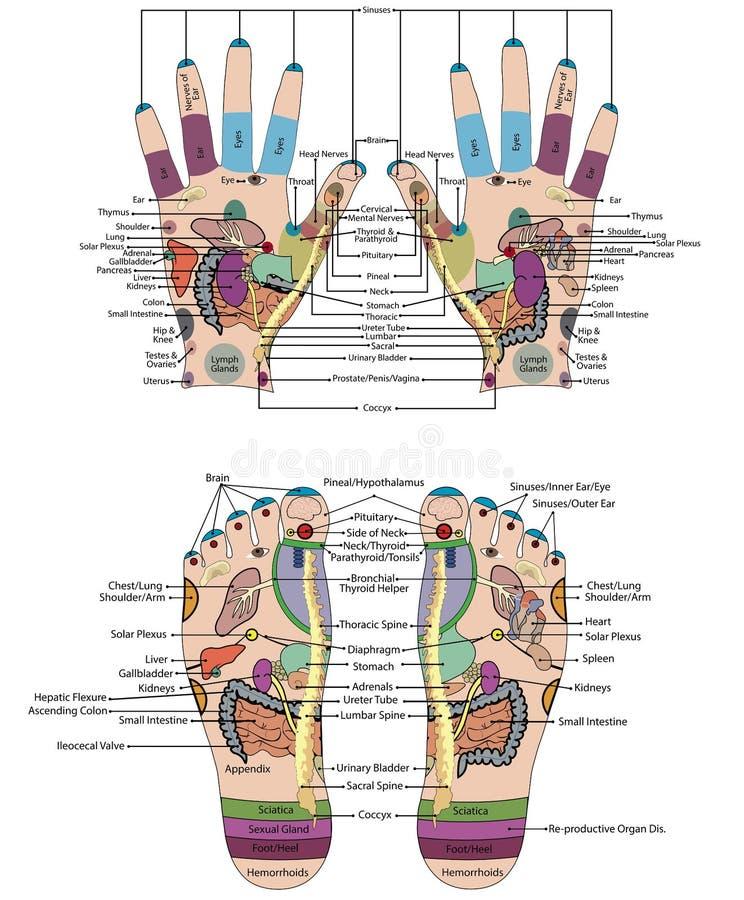 Det traditionella alternativet läker, behandlar med akupunktur - fot- och handintrigen royaltyfri illustrationer