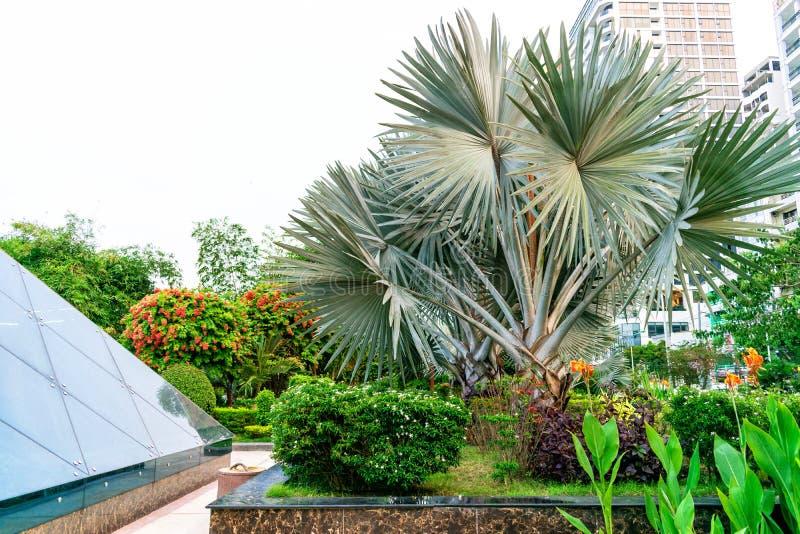Det tropiska trädet med det skarpa bladet är parkerar in nära exponeringsglaskupol arkivbild