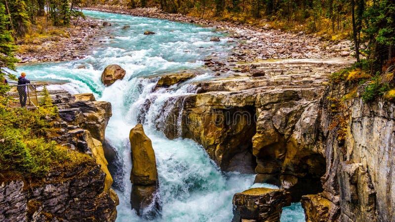 Det turbulenta turkosvattnet av den Sunwapta floden, som den dråsar ner Sunwapta Falls i Jasper National Park royaltyfria bilder