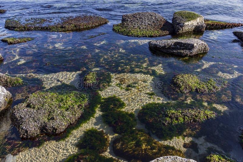 Det undervattens- havet vaggar med alger arkivfoton