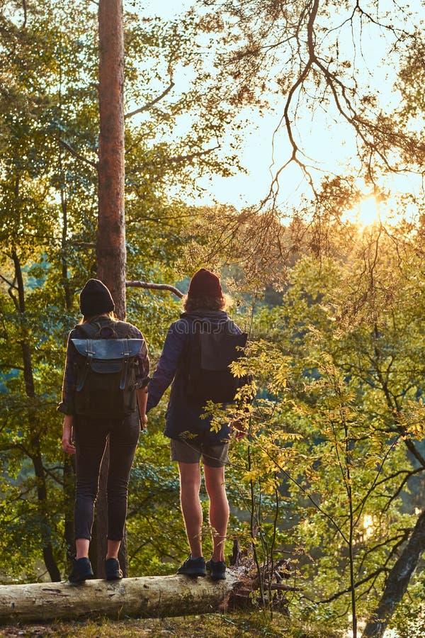 Det unga hipsterparinnehavet räcker anseende på en stam i en härlig skog på solnedgången Lopp, turism och vandring royaltyfri fotografi