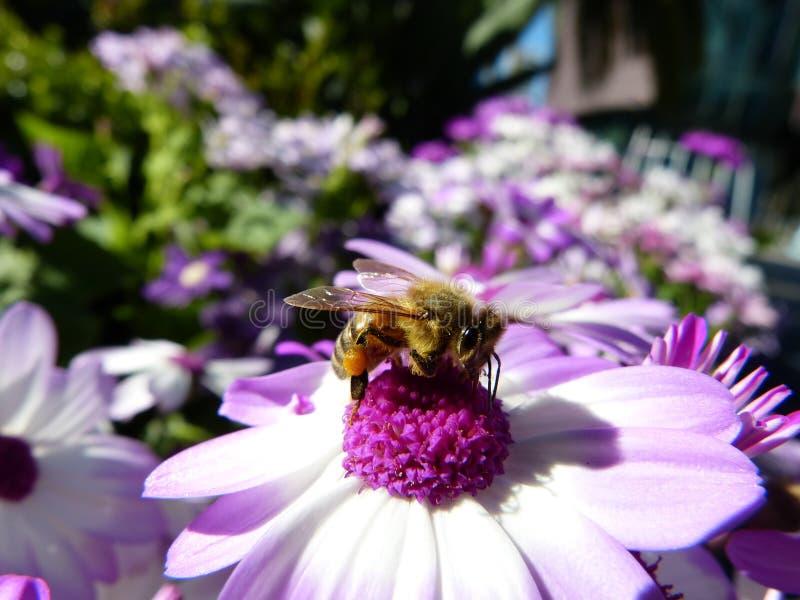 Det upptagna biet i ett offentligt parkerar arkivbild