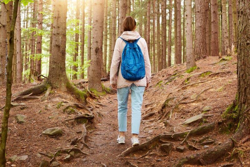 Det utomhus- skottet av flickahandelsresanden som går i skogen, flicka med den blåa ryggsäcken i trän, den unga damen, promenerar royaltyfria foton