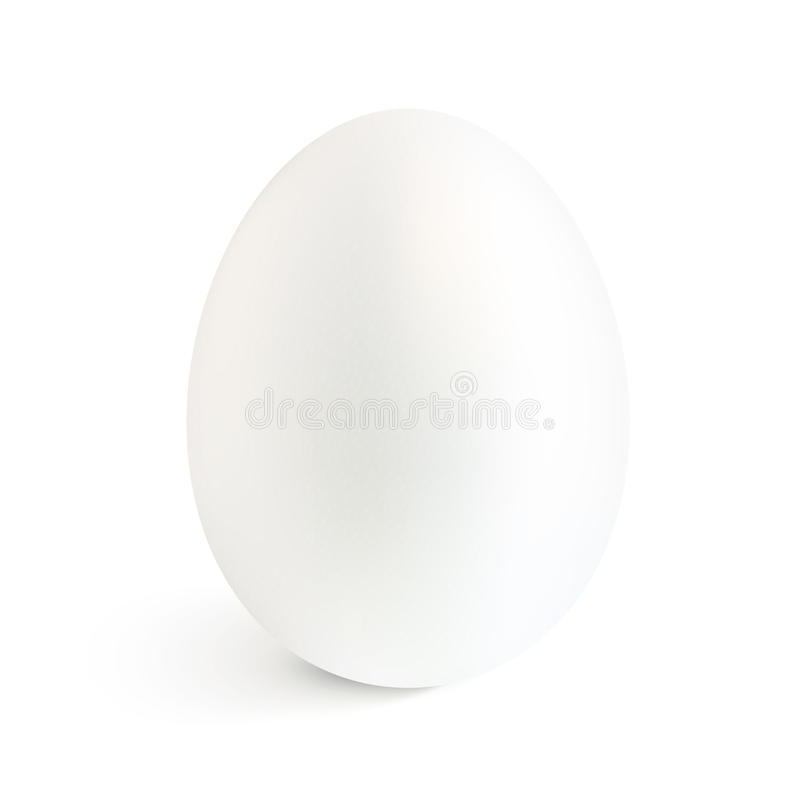 Det vit isolerade realistiska ägget för vektorn med skuggar vektor illustrationer