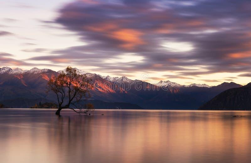 Det Wanaka träd är den berömda gränsmärket i den Wanaka staden, Nya Zeeland arkivbilder