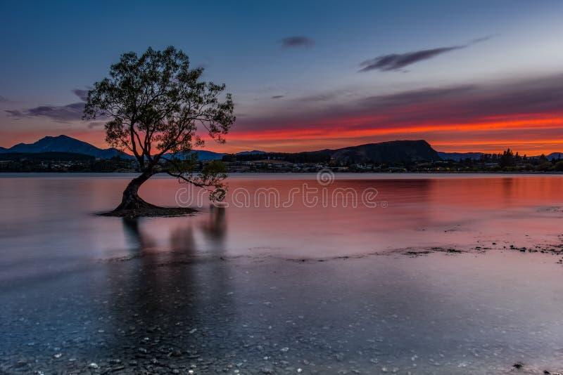 Det Wanaka träd royaltyfri fotografi